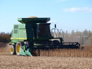 Harvesting soybeans in Albany.