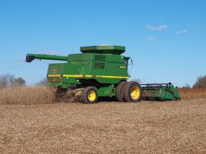 Harvesting soybeans.
